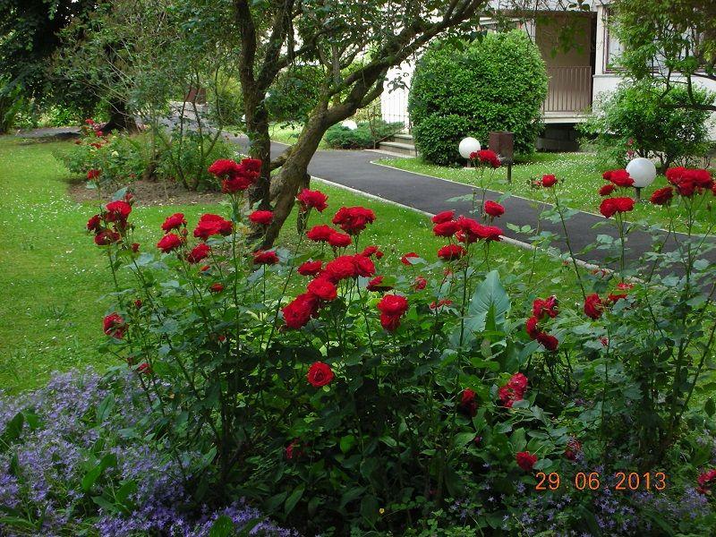 viager occup le pecq bouquet 15 000 viager 1298. Black Bedroom Furniture Sets. Home Design Ideas
